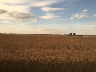 Wheat fields through Illinois
