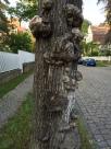 Burly wood tree trunk