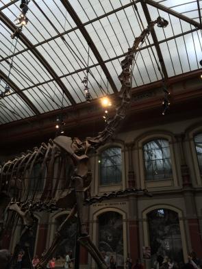 Brachiosaurus top to toe
