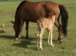 Foal born Yesterday