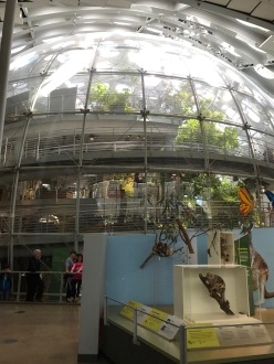 Butterflies are free...in the Reichstag?!?