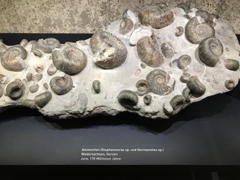 Jura, 170 Million Years