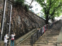 Banyan Tree and Steps
