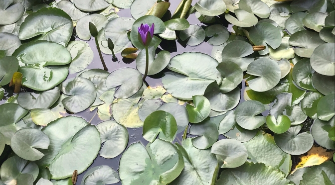 Searching for (Lotus) Roots: Village Visits